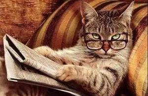 喵星人都发论文了,你还不好好学习?