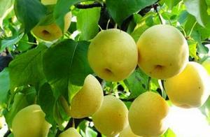 金川藏羌风情节暨绿色生态农产品年货节在蓉举行