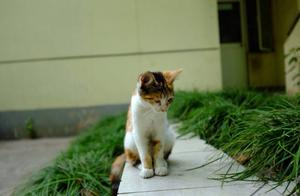 猫行天下,校园中的猫猫狗狗为什么有很多?责任教育迫不可待