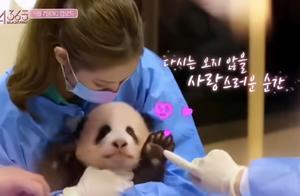 韩国艺人违规接触熊猫幼崽被喷,却被粉丝洗白:追星也要有底线