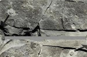 5亿年前踩了三叶虫一脚的家伙,因为这一脚,把科学家给难倒了
