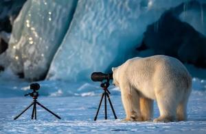 2020搞笑野生动物摄影大赛佳作流出,动物界的戏精们都来了