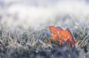 霜降 | 枯草霜花白,寒窗月新影