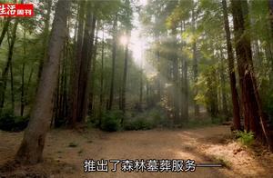 硅谷公司推出树林墓葬服务:人死后做肥料树下长眠