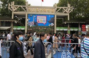 """南京红山动物园客流量""""报复性""""恢复 游客:像过年一样"""