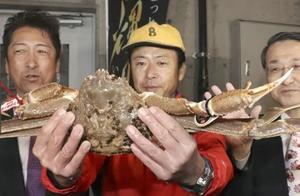 史上最贵天价螃蟹,日本一只螃蟹拍出32万天价