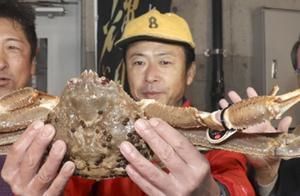 日本32万天价蟹王!打破全球螃蟹最高竞拍记录,即将转卖到日料店