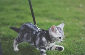 辟谣!绝不能带猫咪出门遛弯,但事实上做好这些就不用担心了