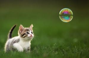 被烫伤母猫救治无效死亡 虐待动物是否应该立法?
