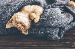 养猫人哭了!养猫后生活发生的10种变化,字字诛心
