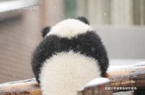 北方熊猫过冬VS南方熊猫过冬,都有啥区别?