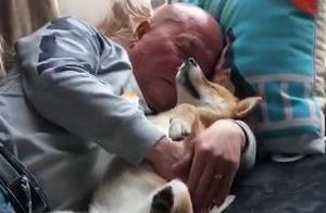 爸爸拿柴犬当孩子哄,紧搂在怀里哄着拍着睡午觉,真的好幸福啊