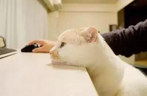 """""""谈恋爱不如养猫"""""""