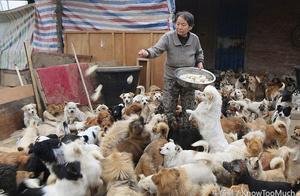 五位年迈老人每天四点起床喂养1300只流浪狗