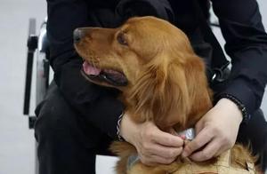 盲人歌手带导盲犬在上海住酒店遭拒,究竟是谁的过错?