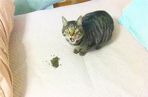 猫咪遭冤枉后一脸惊恐:真不是我拉的,不信你闻