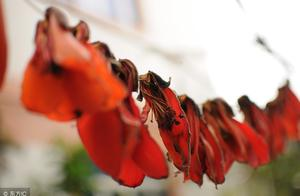 这植物可不单是用来观赏,有很高的药用价值,能煮粥煲汤,治胃炎