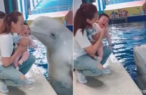 白鲸跃出水面热情献吻,小宝宝吓坏嚎啕大哭超不给面子!