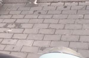 软萌小短腿过桥成问题,狗狗:还不赶紧过来抱我,哼,不理你了!
