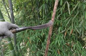 泸州一村两千亩耕地被松鼠侵占 常住人口锐减两千多人