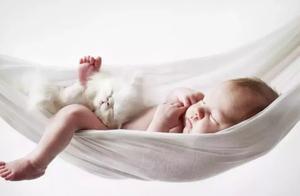 """家有新生儿到来,请最好以下几点,猫咪和新生儿都会""""相安无事"""""""