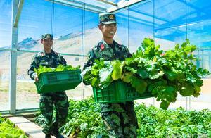 """海拔4300米,武警官兵在""""生命禁区"""" 种出绿色蔬菜"""