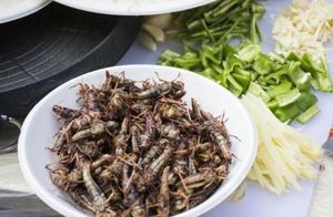 武汉一高校毕业季办昆虫宴 食客吃虫竟尝出虾味