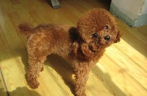 你家狗狗生气是什么样子的,我家的软萌可爱,让人欲罢不能!