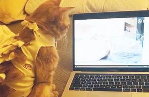 猫趁主人上厕所时,偷看电脑,喵:我一单身猫,你放这个给我看?