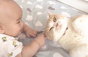 网友:听说有了小孩不能养猫?铲屎官:不能,猫会被小孩玩坏!