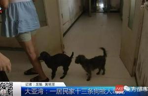 女子在居民楼道里收养13条流浪狗,分两批被人毒死