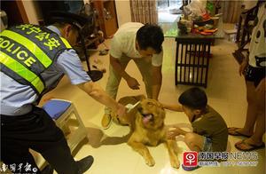 南宁警方对辖区犬只展开排查,发现不少问题!