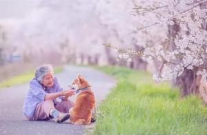 奶奶陪比熊犬雨天散步,全程帮狗狗打伞挡雨,半边身子都湿透了!
