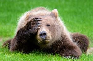 """图集:动物界演技大比拼,谁才是""""戏精本精"""""""