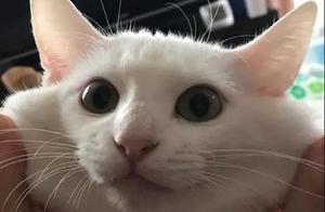 撸猫使人幸福养猫让人快乐,这说法可真是有依据的!