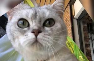 懒惰的猫咪突然变的勤快,原来是想着家里的仓鼠,结果如愿以偿了