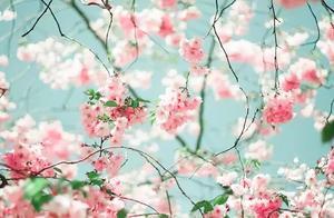 致女神的8首诗,春风十里不如你,三里桃花不及卿