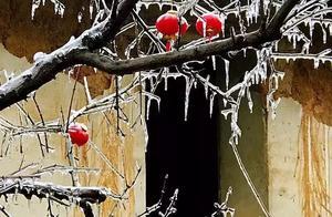 不用去看故宫的雪!钱塘江畔的冰雪霸屏了……美翻了整个江南!