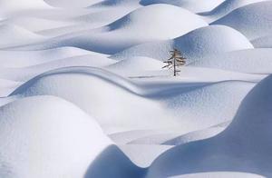 美到极致,极简雪景,冬天最高级的美