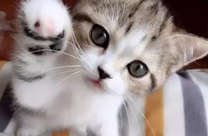 猫咪身上出现这些坏习惯,尤其是第4个,一定要改正