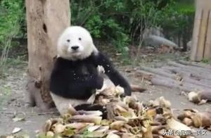 每日一乐哈哈哈哈哈:动物世界那些事儿哈哈哈哈哈