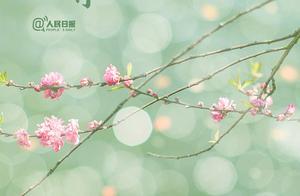1月已悄然过去2月温暖的春天已开始启程