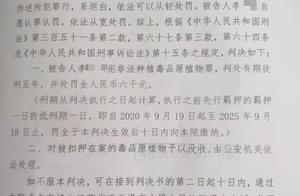 江苏七旬老太种植罂粟被判五年 律师:判决合法但不合理