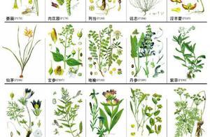 274种中草药材手绘图,值得认识收藏!