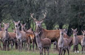 500只野生动物遭西班牙猎人屠杀