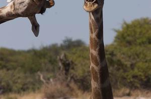 「龙腾网」2020年野生动物搞笑摄影大奖入围作品展