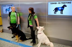 """芬兰机场安排4条狗为旅客检测新冠病毒,当地官员赞""""很省钱"""""""