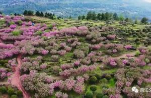 实在是太美了!樱花绽放心花开,春游南江正当时!