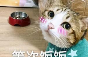 """论""""用餐仪式感"""",你都不如一只猫"""