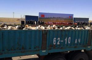 特别的礼物,蒙古捐赠的3万只羊来了!网友表示:流下感动的口水